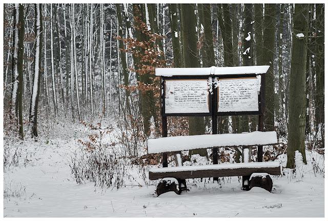 Winter im Zeitzer Forst III