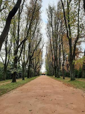 alameda com árvores no outono
