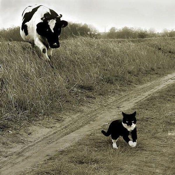 صور قطط مضحكه