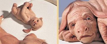 Querem brincar de Deus: Híbridos humano-animal vão ser desenvolvidos no Japão
