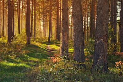 Gambar pemandangan hutan
