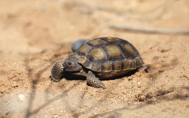 SOS εκπέμπουν τα απειλούμενα είδη πανίδας της Ελλάδας: Μόνο το 18% προστατεύεται πλήρως