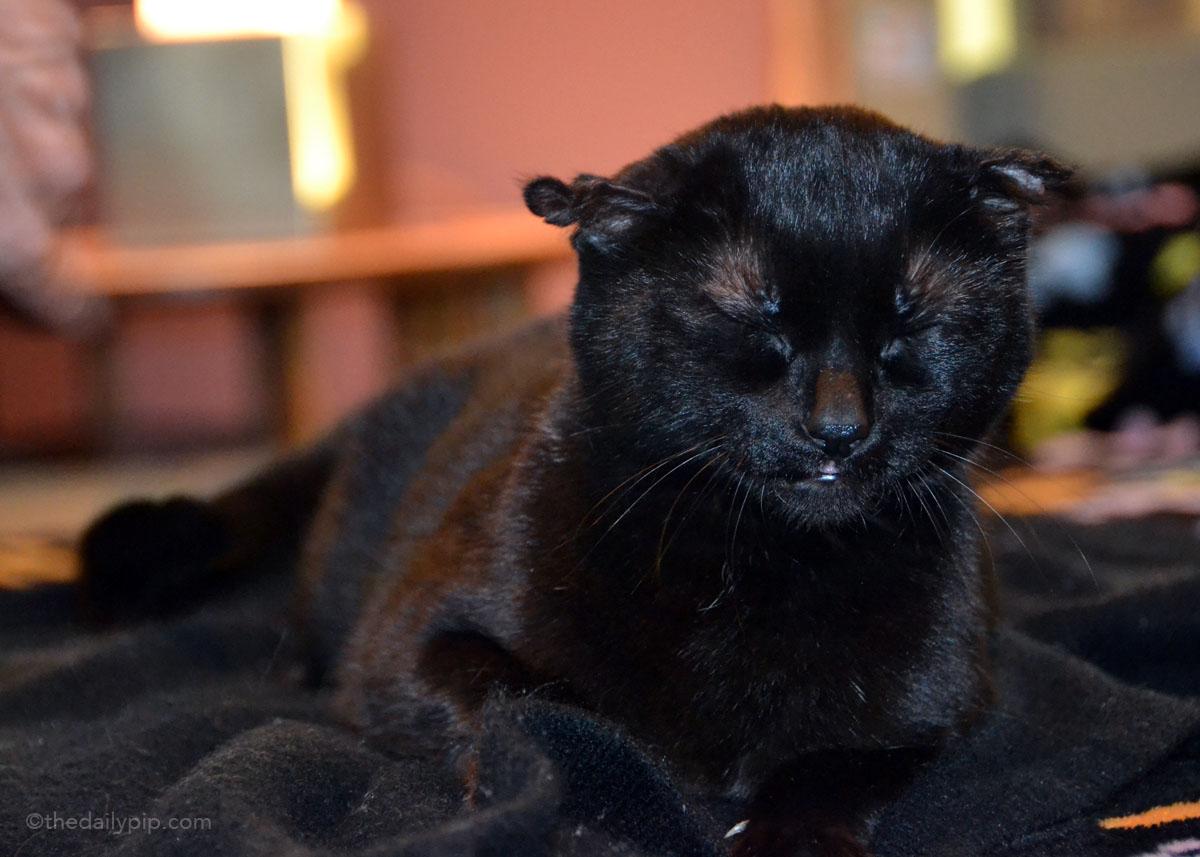 Fur-busting hack #1 - Wearing black helps disguise pet fur
