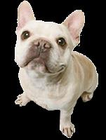Cachorro pequeno png