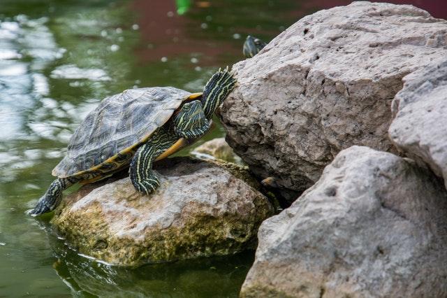 belajar dari kura-kura