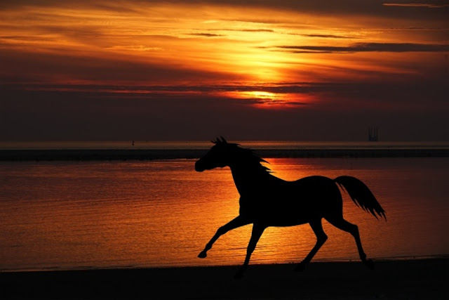 horse-wallpaper-riding