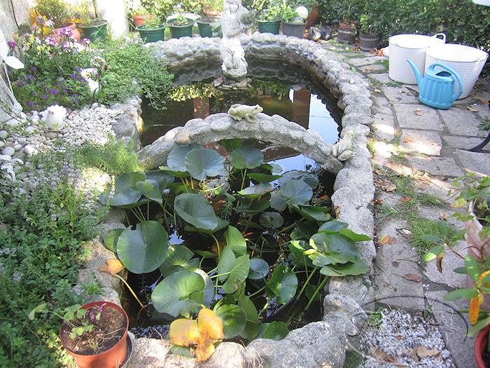 Mi jardin y mi huerto agosto 2011 reforma en mi estanque for Pozos para peces