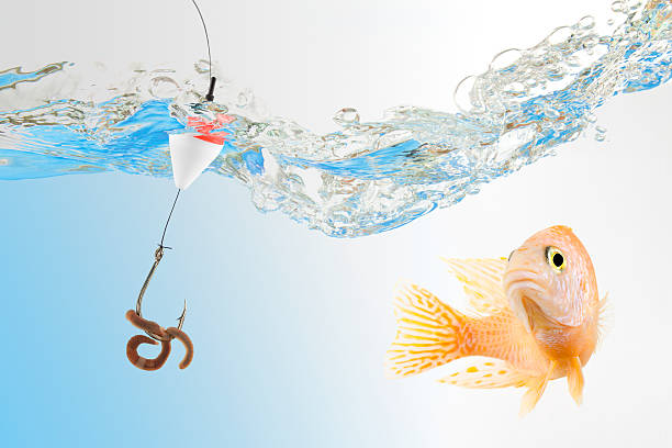 Fishing Bait – The Types and What to Look For