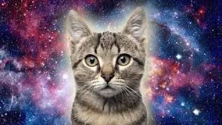 La misión espiritual de los gatos