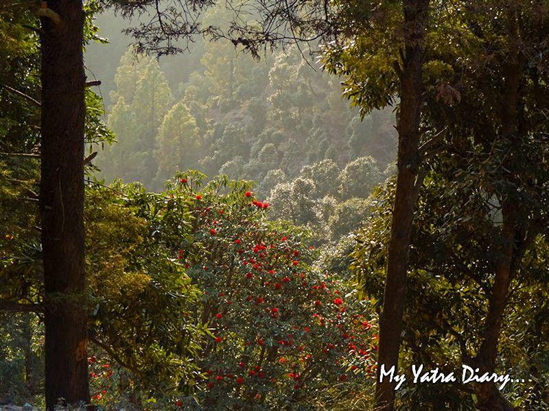Seasonal trees at Dhanachuli Uttarakhand