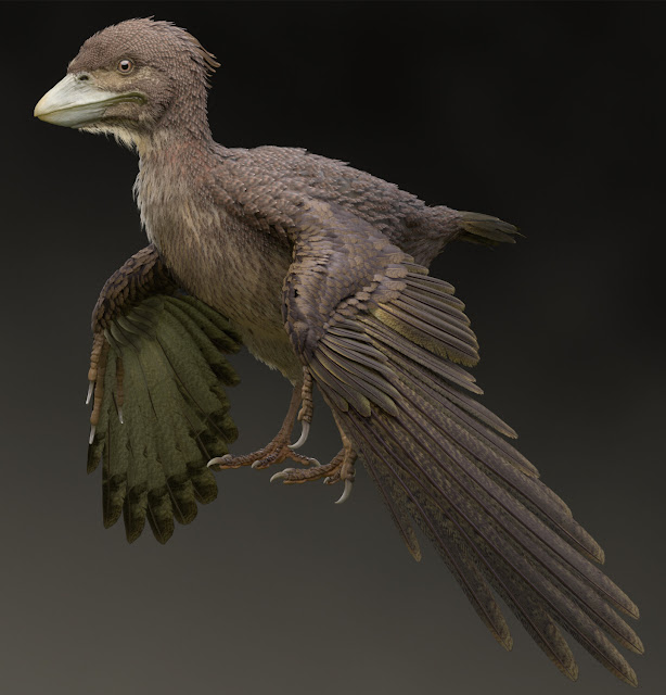 Fossil of Early Cretaceous bird from Japan confirmed to be new species
