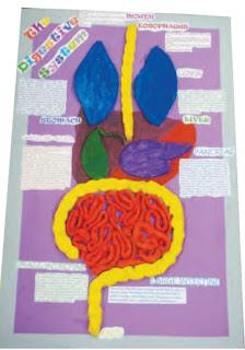 Poster tentang Sistem Pencernaan Manusia