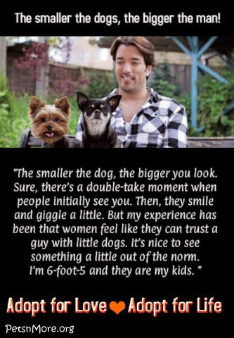 animal, dog, cat, pet, animal, inspiring quotes for animal lovers, petsnmore.org, Jonathan Scott