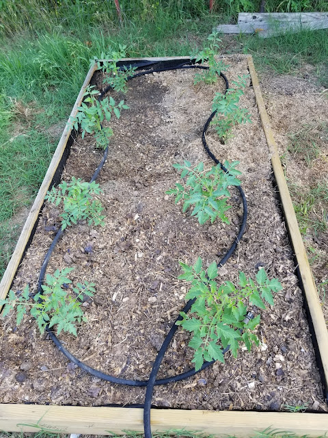 By adding fittings to both ends I made a shorter soaker hose that fits the tomato bed perfectly.