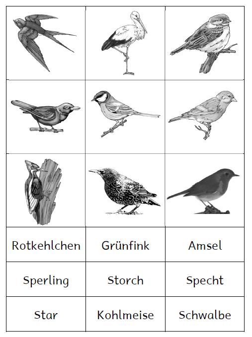 Vögel Im Winter Grundschule