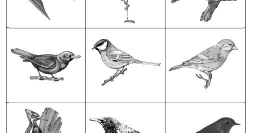 grundschultante: ergänzung vögel im winter