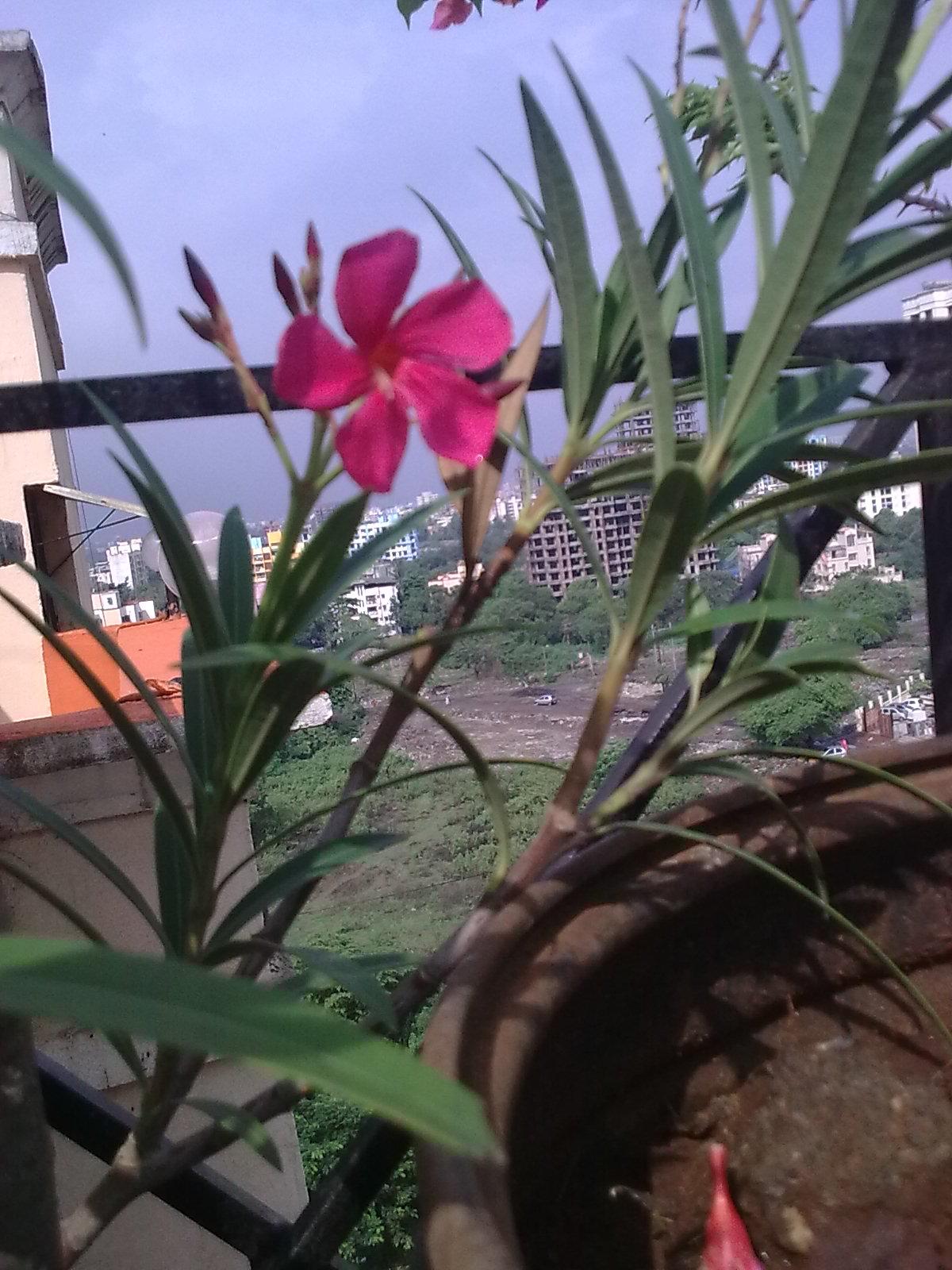 Garden Care Simplified Kaner Flowering Plant