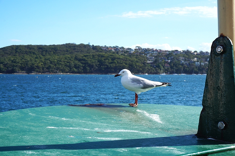 on the Manly Ferry, Sydney, Australia, Euriental