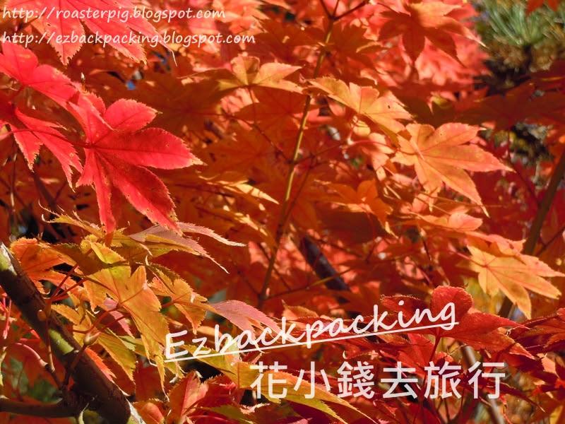 2020年大阪+關西夜楓紅葉祭情報