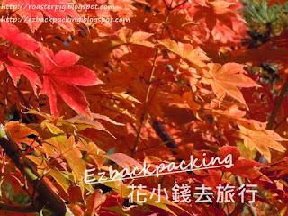 2020年京都夜楓+紅葉祭