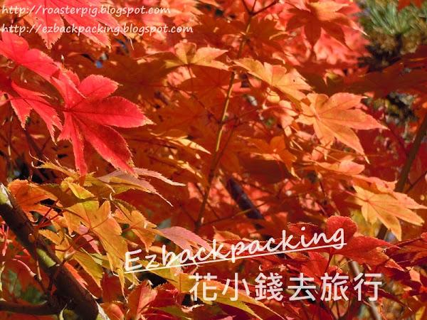 2021年京都夜楓紅葉祭情報+嵐山嵯峨野小火車夜楓時間表