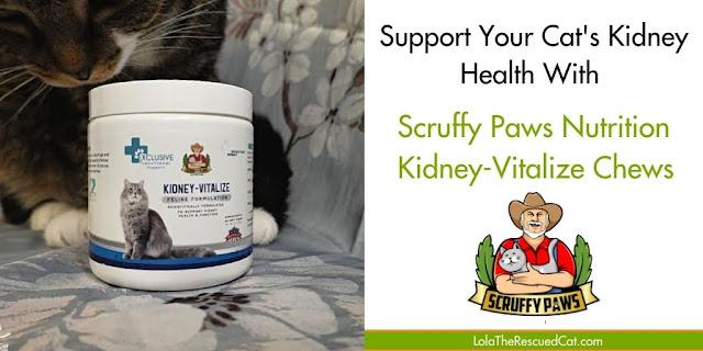 Kidney-Vitalize Twitter Graphic