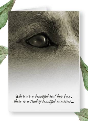 beautiful memories dog sympathy card