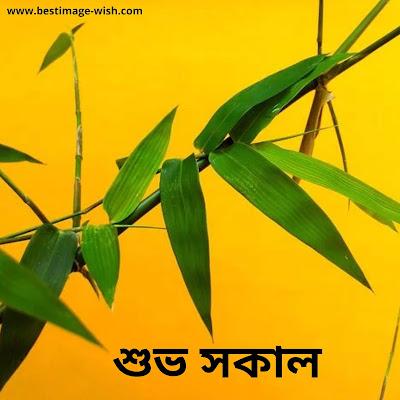best good morning images bengali