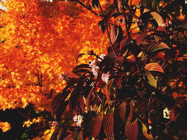 8 Autumnal Phone Backgrounds || Blogtober