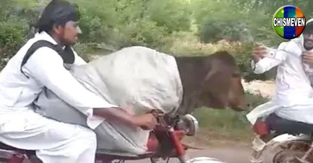 Asesinaron a un individuo cuando intentaba robarse una vaca