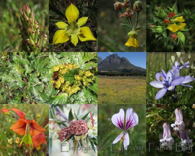 Rondebosch Common October flowers