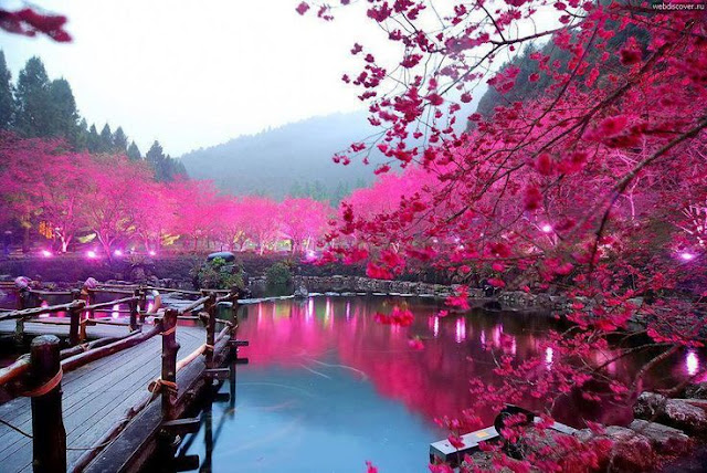 Taichung in Spring