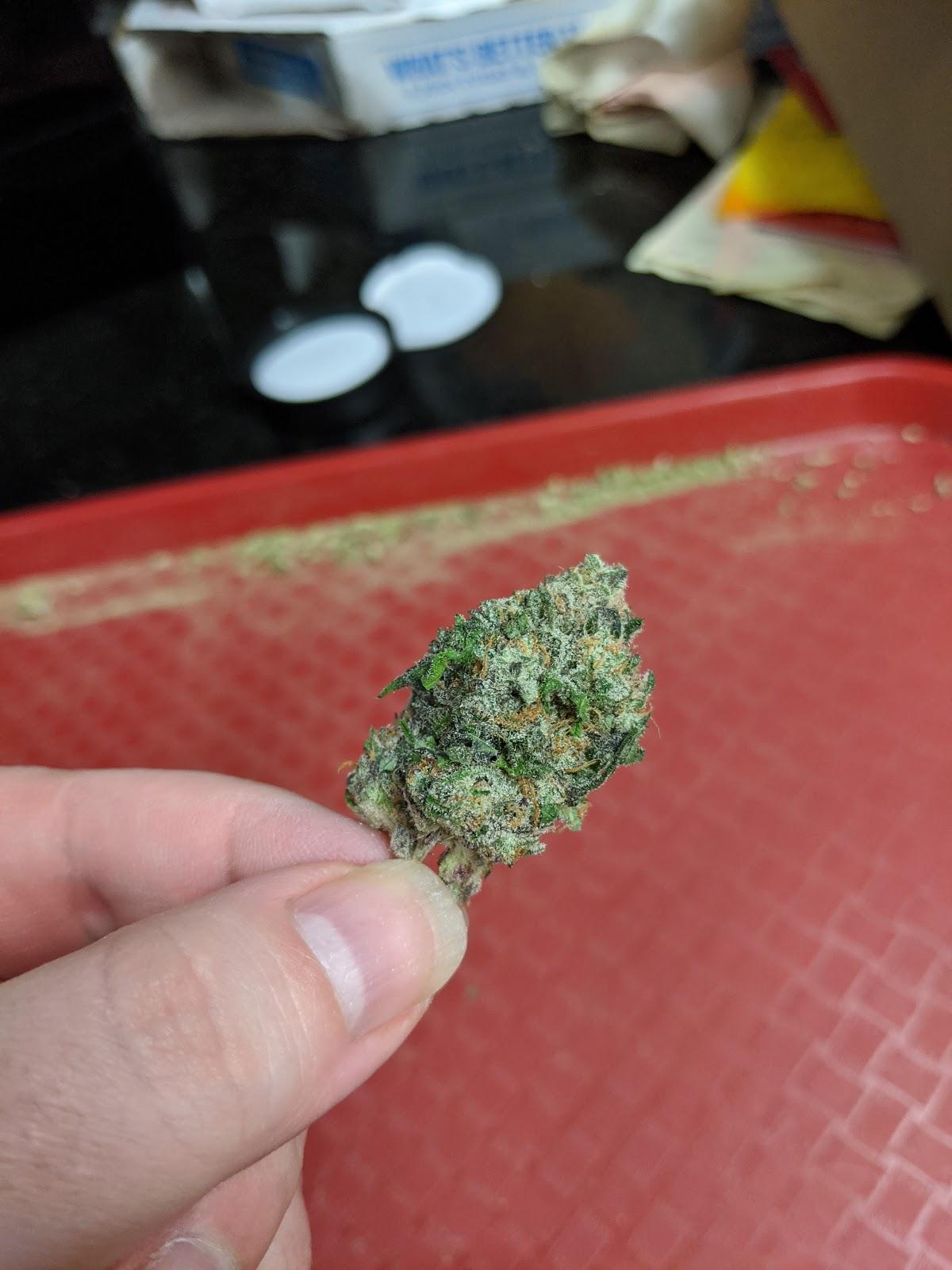 Cannabis Roach Clip Purple Haze