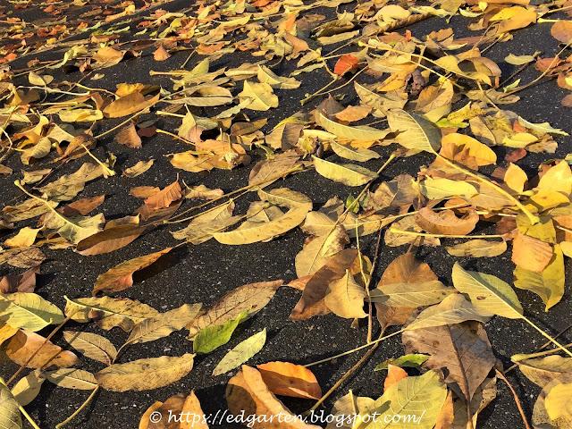 Herbstlaub auf der Strasse