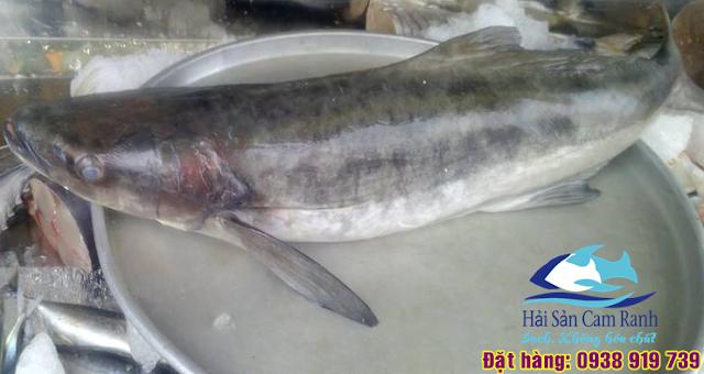 Cá bóp tươi - Sạch, không tẩm ướp hóa chất