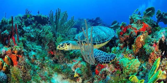 O que fazer na Isla Mujeres em Cancún