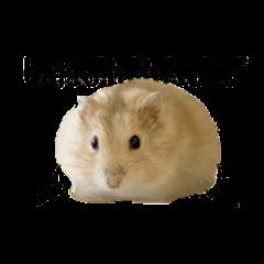 HamsterPhotoStamPooo