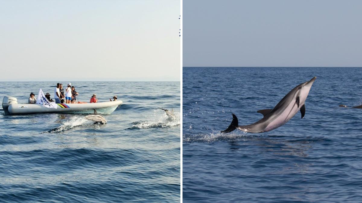 Generazione Blu contest MareCamp ecosistema marino