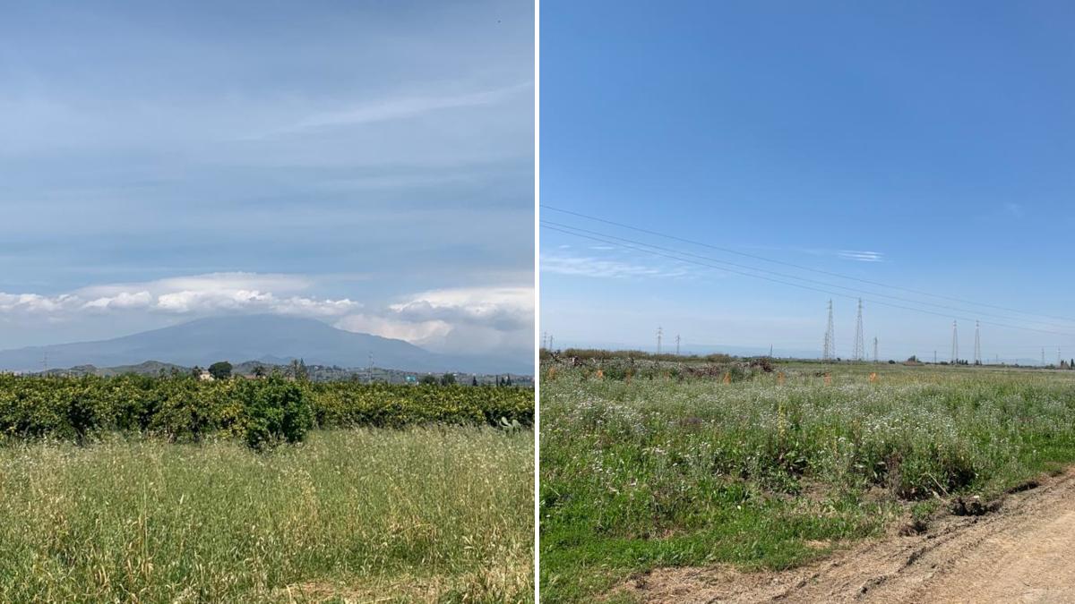 Bando Comune Catania lotti terreno agricolo Piana