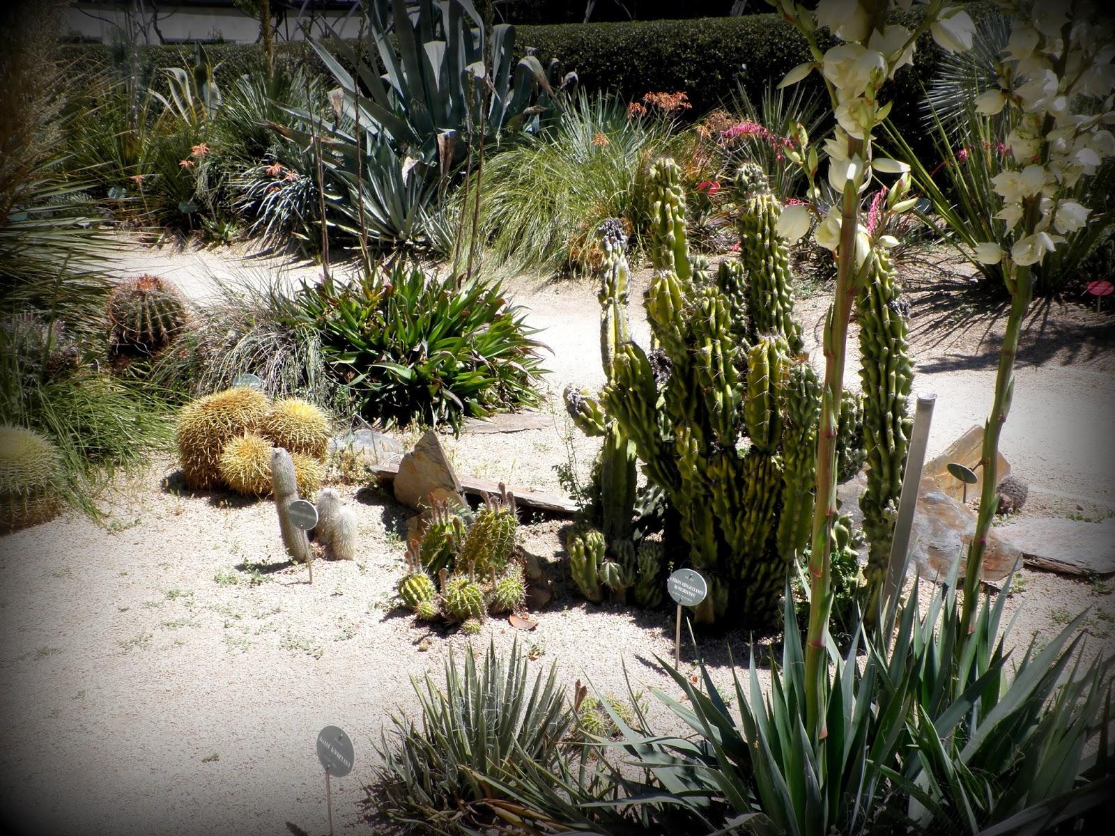 Plantas suculentas en el Botánico de Madrid