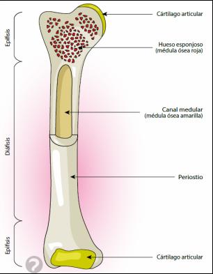 Clasificación de las fracturas   Se dice Médico