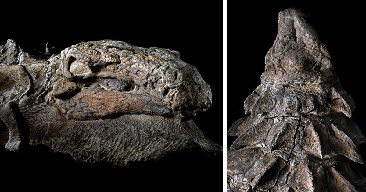 Dinosaur, Mummy, Fossil