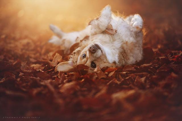 Φθινόπωρο σκύλοι