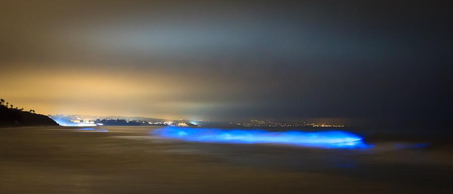 Bioluminescence in assamese