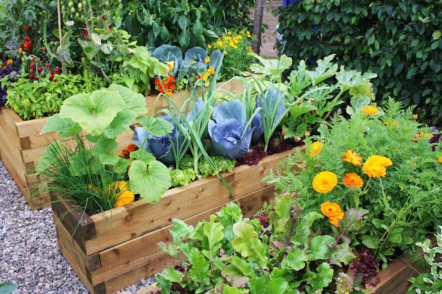 Best Vegetables That Grow Well in A Container or Pot