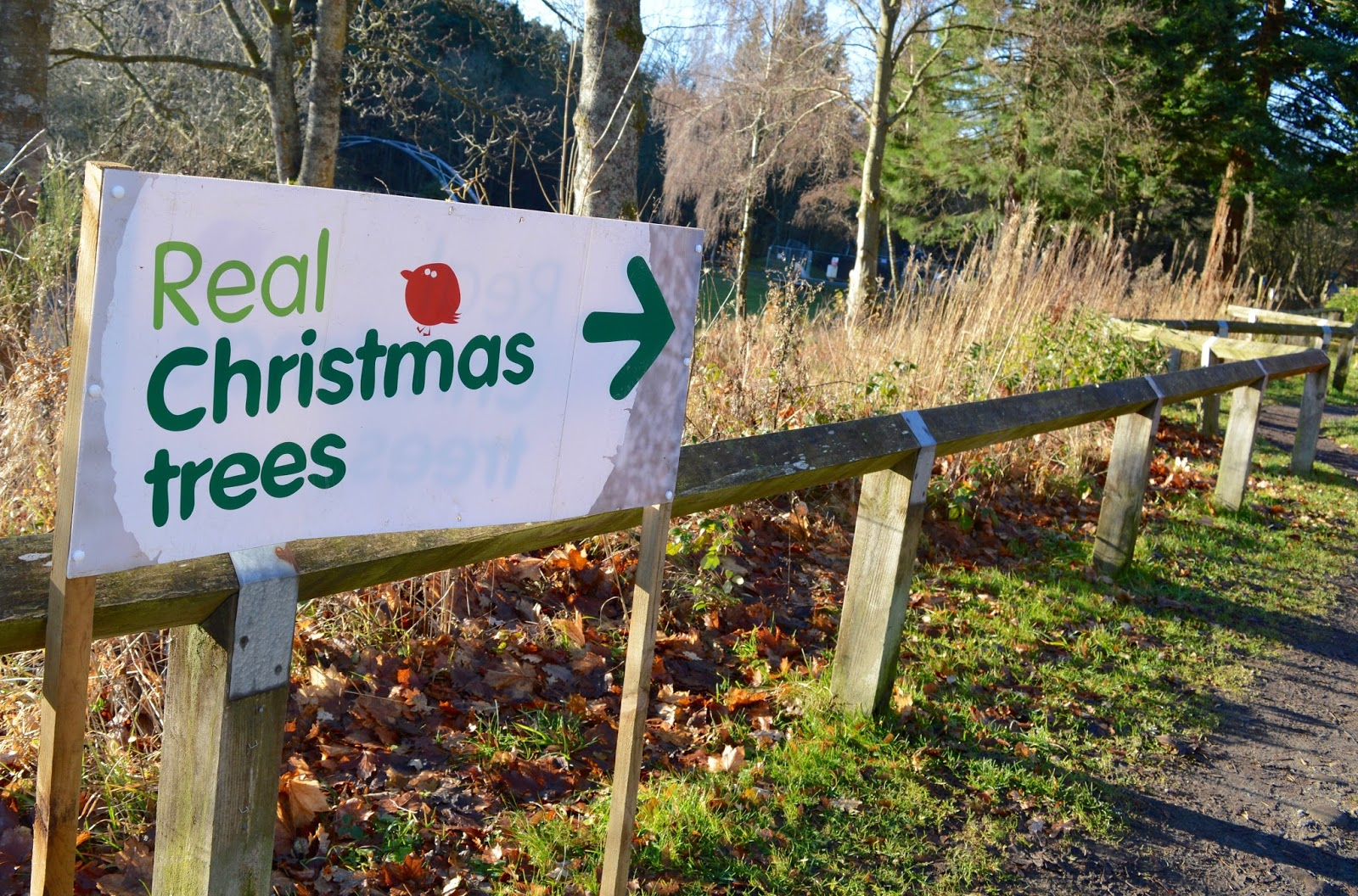 Buying a Real Christmas Tree from Hamsterley Forest, Durham
