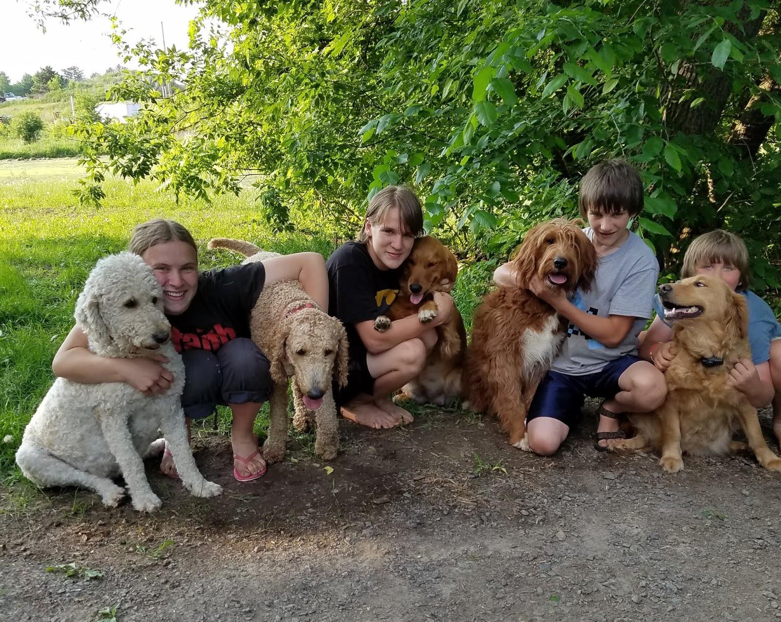 Granton Creek Goldendoodles Meet The Parents