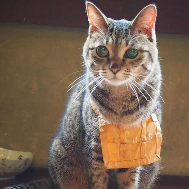 Các mèo chú tiểu cũng rất dễ thương, chúng đeo tạp dề vì phải đóng vai giúp việc.