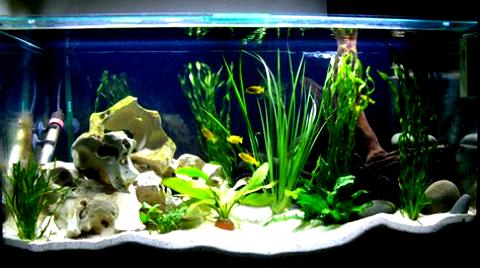 Gambar Model Aquarium Ikan Hias