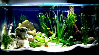 Tips pemeliharaan ikan hias di tempat akuarium yang baik